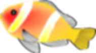 amphiprion