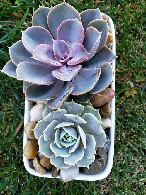 Rectangular Succulent Arrangement