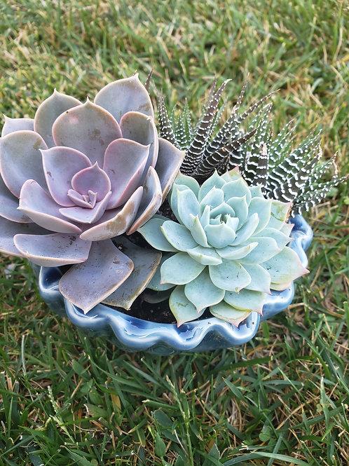 Seashell Succulent Arrangement