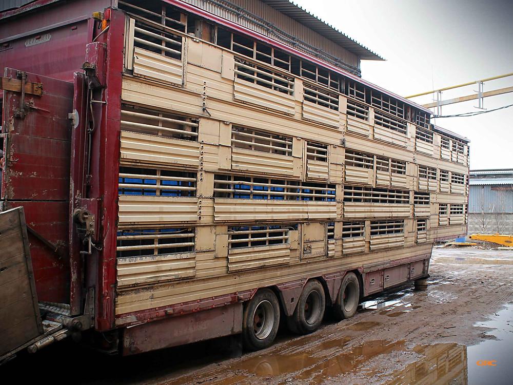 Ремонт подъемных этажей прицепа свиновоза