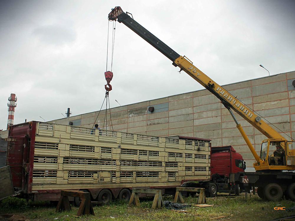 устанавливаем восстановленные этажи в прицеп свиновоза