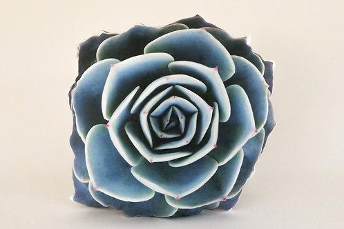 Succulent Pillow : Echeveria Imbricata