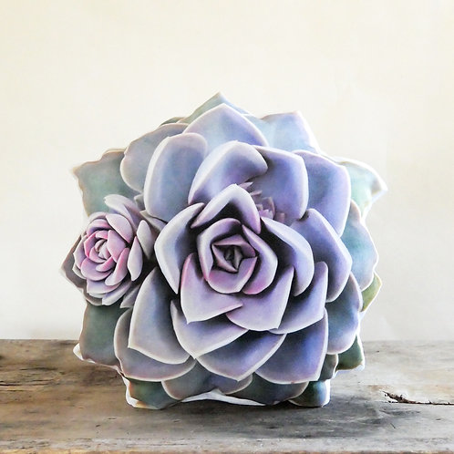 Succulent pillow : Echeveria PVN