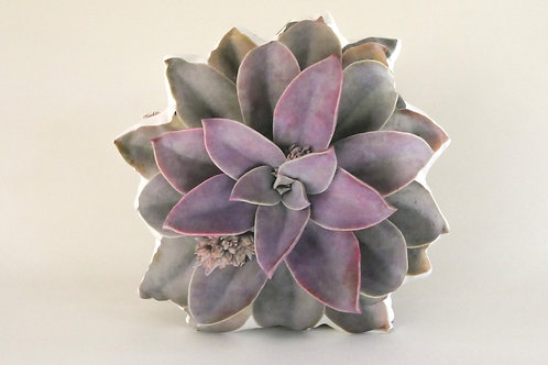 Succulent Pillow : Graptoveria 'Fred Ives'