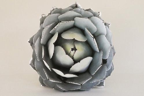 Succulent Pillow : Agave Parryi Var Truncata