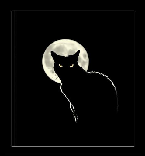 Midnight-Encounter