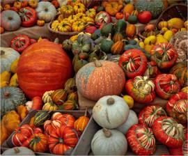 Autumn Harvest by Gillian M