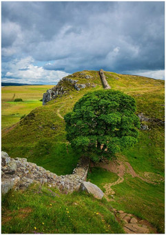 Sycamore Gap by Brian C