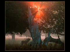 Red Deer Stag - Greeting the Dawn by David H