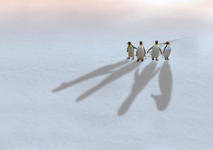 Antarctic-Shadows