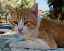 Cat's Eyes by Barbara A