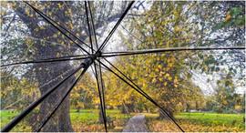 Brollies Up On  Autumn Walk by Gillian M
