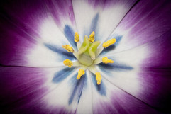 Floral display by Steve H
