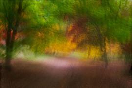 Autumn Movement by Brian C