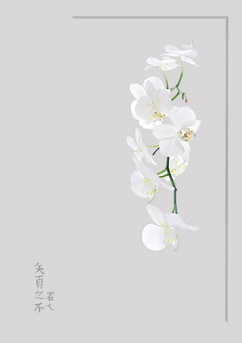 Orchid by Dave S
