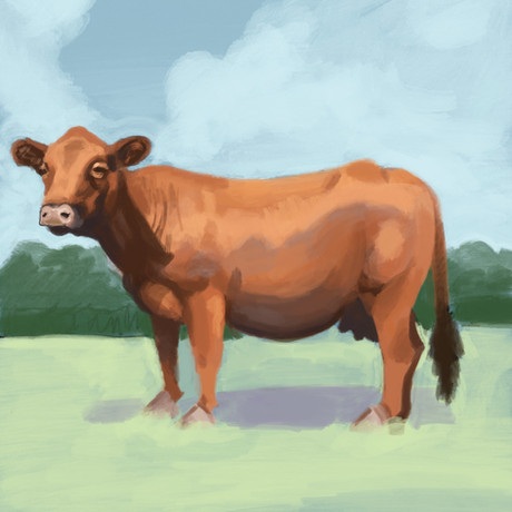 Cow in a Meadow