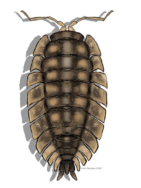 The Isopod