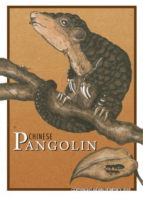 Chinese Pangolin
