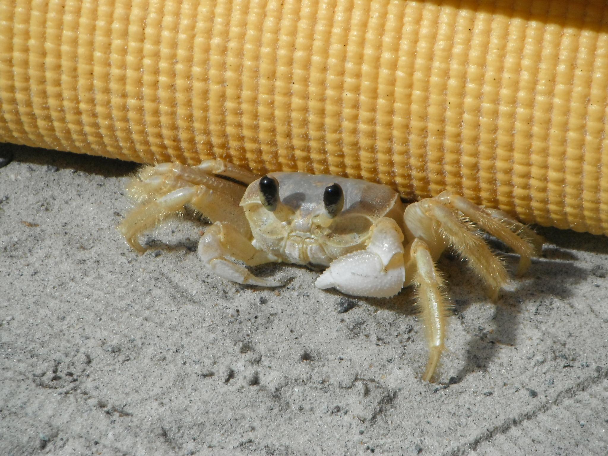 Tiny crab!