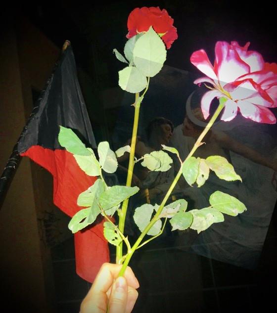 anarchy roses.jpeg