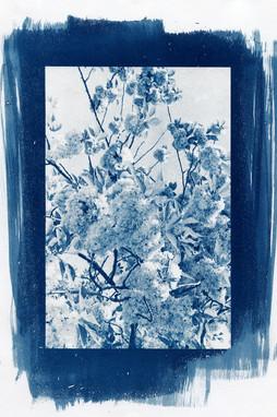 image 02 cyanotype 2020.jpg