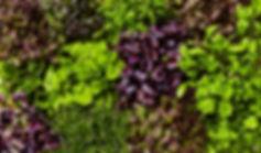 Micro herbs22_0649.jpg