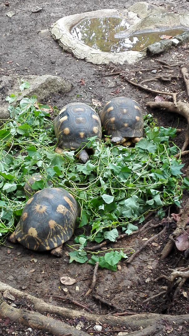 Star turtles
