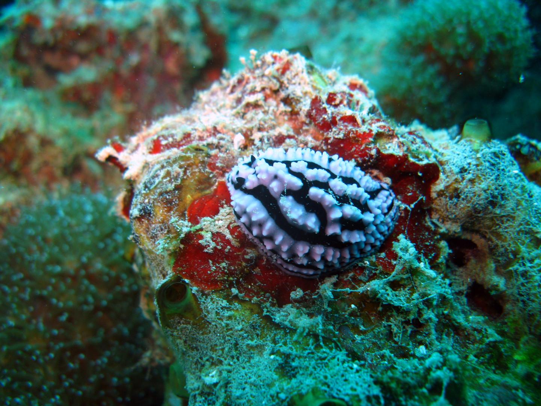 Nudibranche