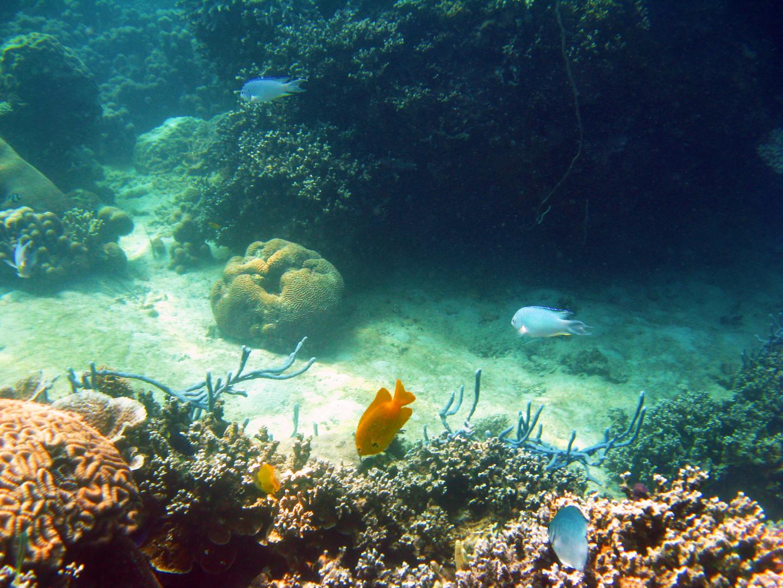 Plongée sous marine - Fonds coralliens
