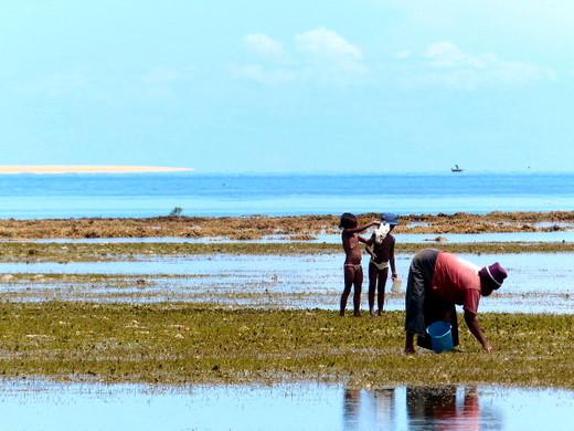 Pêche du matin - Floraly Komba