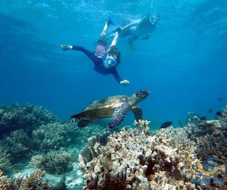 Nage avec tortues marines