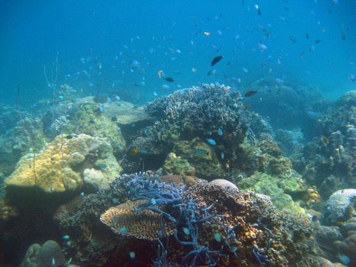 Fonds coralliens