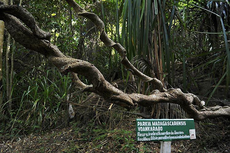 Parc National de Lokobé
