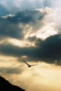 Humanist Celebrant - planning for the end - peaceful sky