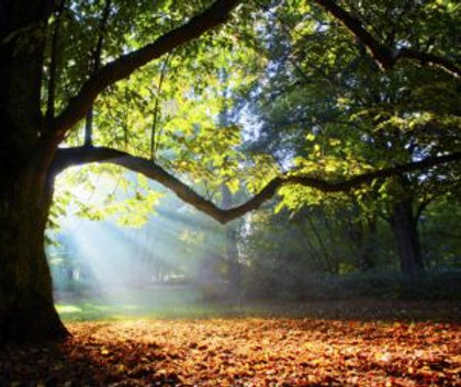 Humanist Celebrant forest picture