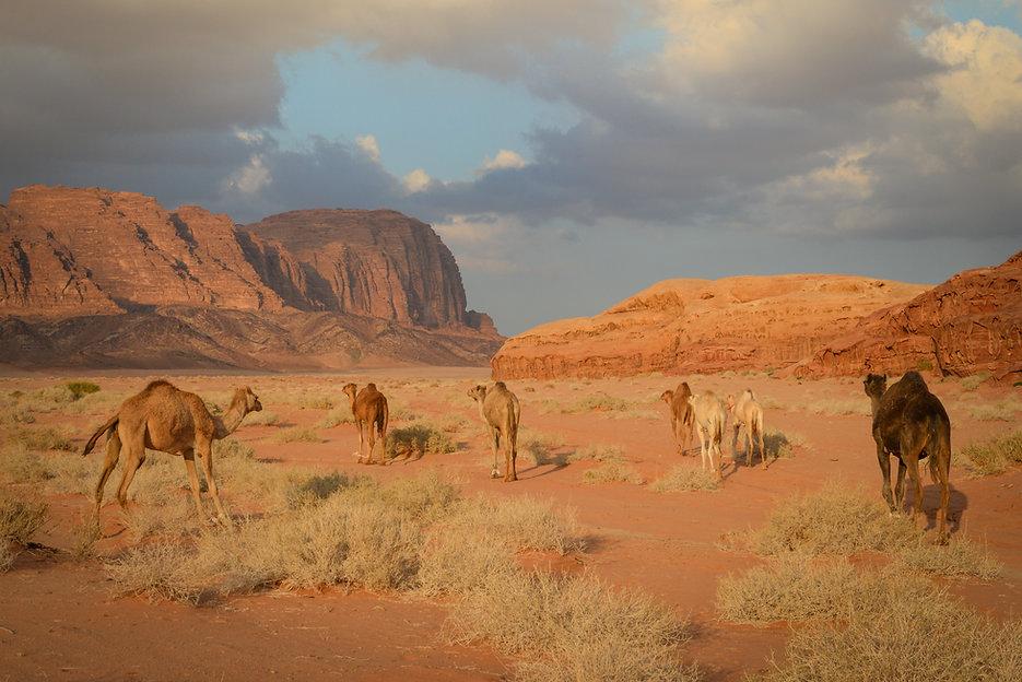 Desert flora and fauna.