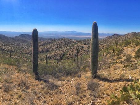 Synchronicity in the Desert