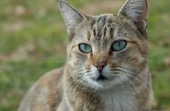 Stray Cat    Franz Sigel Park