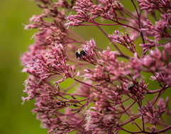 Botanical Garden Bokeh Wednesdays