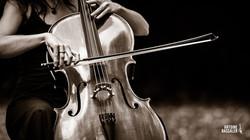 Lyse violoncelle