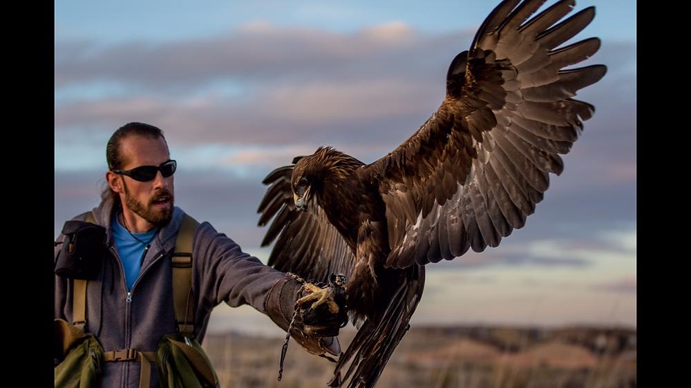 Dexter Golden Eagle Untamed National Geographic