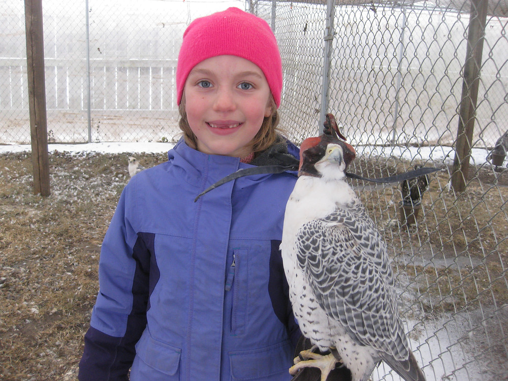Holly Curtis Falconry Experience