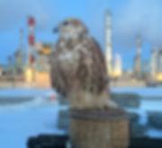 Falcon refinery abatement