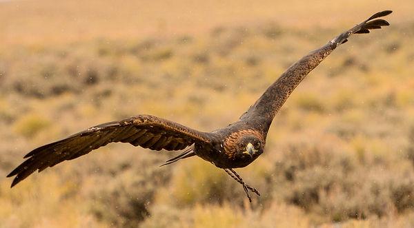 Eagle 2018-35-L.jpg