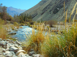 0015 Fluss Pampa