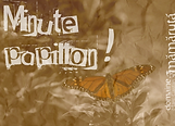 Carré_Minute_Papillon.png