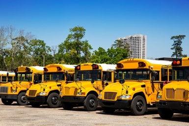 School Busses.jpg
