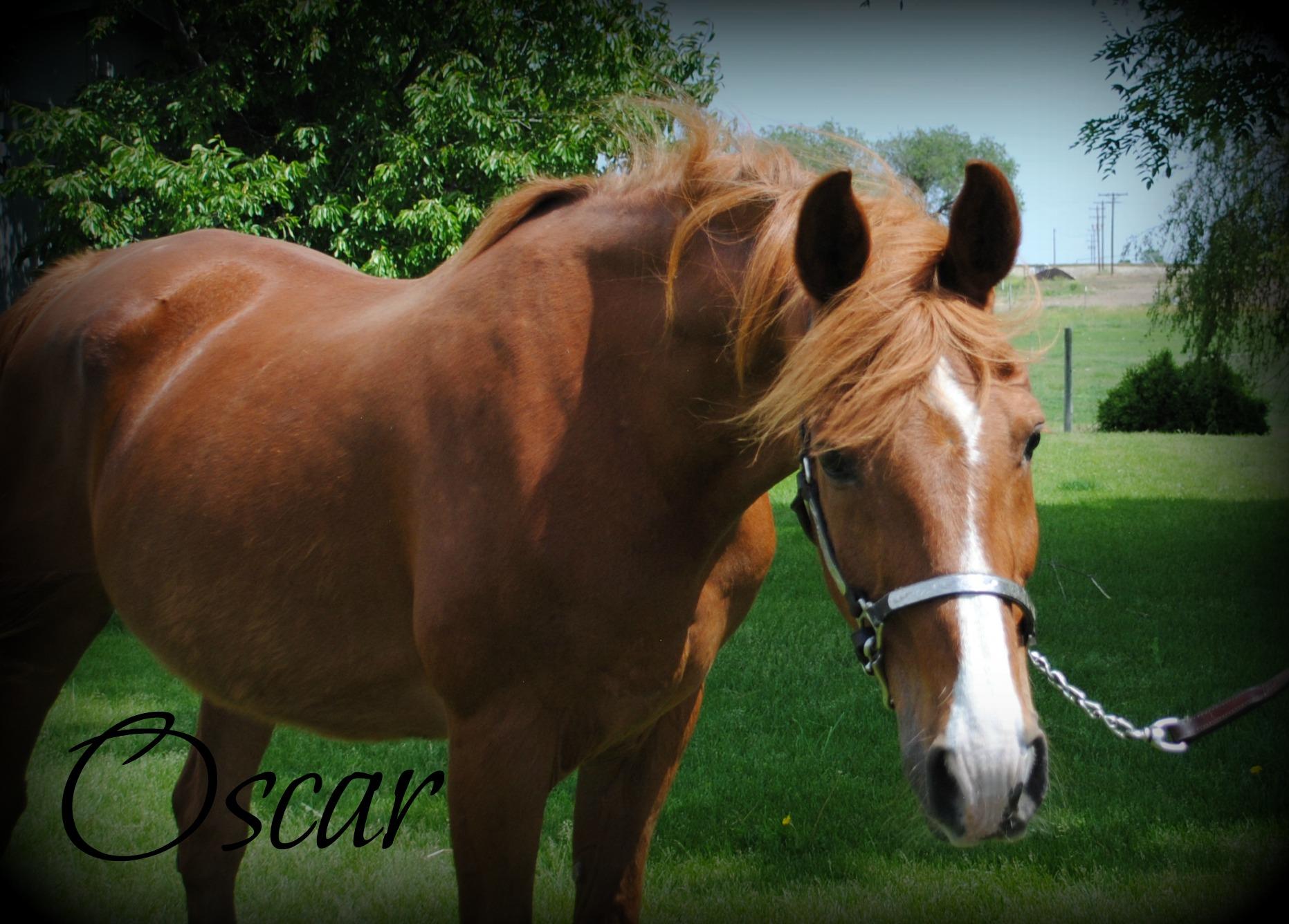 CEOEW-Oscar