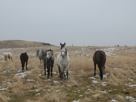 Holy Horses!