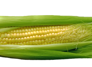 Healing Gifts from Nature:  Corn Silk